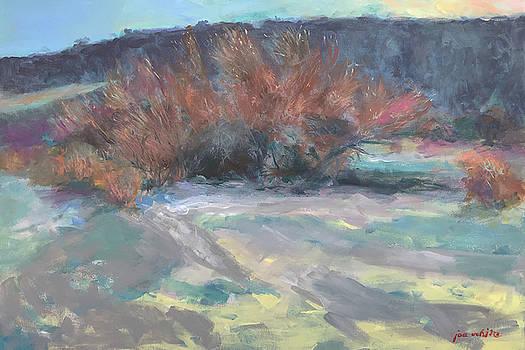 Blue Palo Verde by Joe White