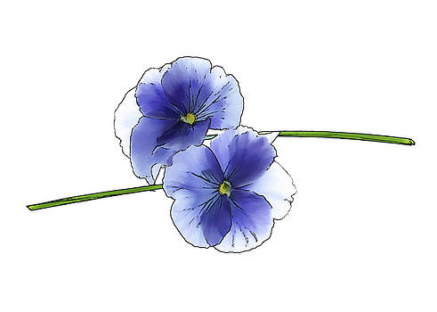 Blue Pansy Duo by Beth Fox