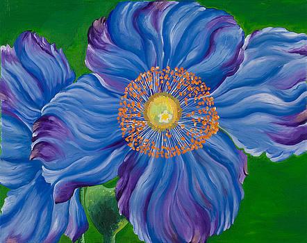 Blue Poppies by Sweta Prasad