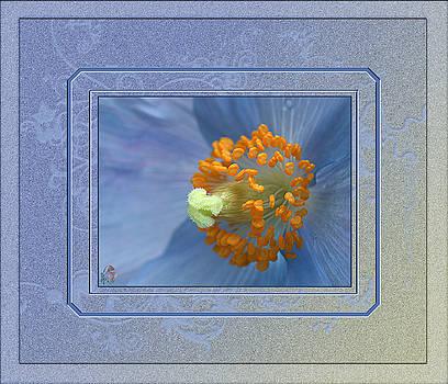 Blue Poppy - Meconopsis by Patricia Whitaker