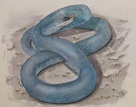 Blue Racer Snake by Kelly Mills