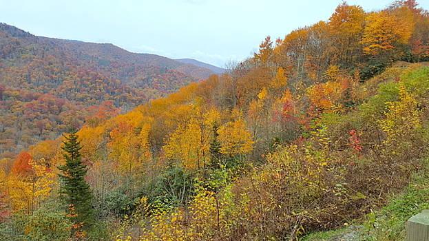 Blue Ridge Autumn 2 by Brenda Stevens Fanning