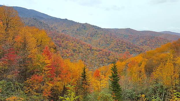 Blue Ridge Autumn by Brenda Stevens Fanning