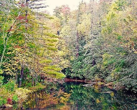 Patricia Taylor - Blue Ridge Mountain Stream