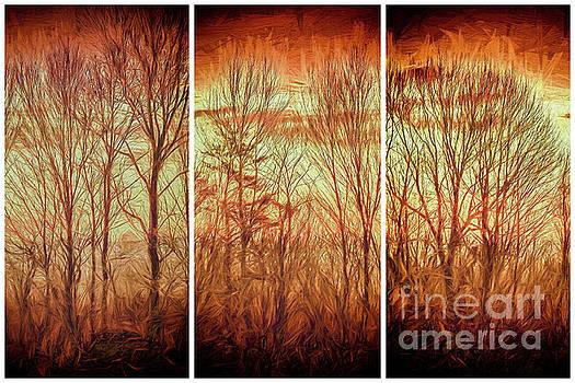 Blue Ridge Mountain Winter Trees at Sunrise FX by Dan Carmichael