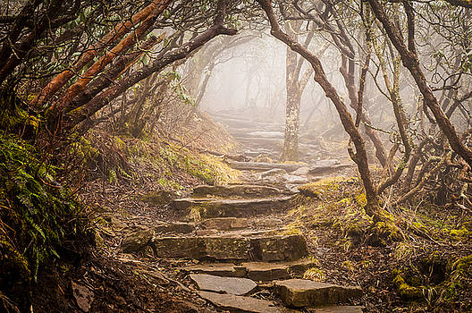 Blue Ridge Mountains NC Into The Mystic by Robert Stephens