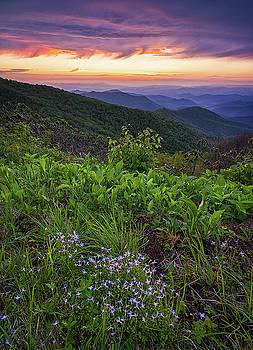 Blue Ridge Parkway - Bluets  by Jason Penland