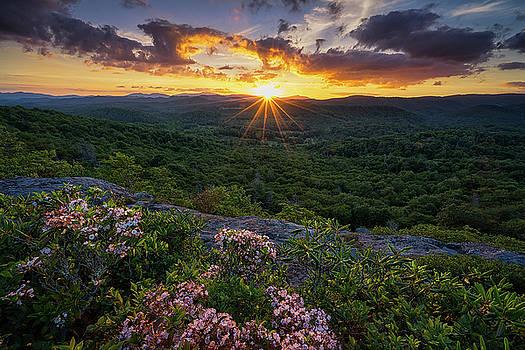Blue Ridge Parkway - Mountain Laurel  by Jason Penland