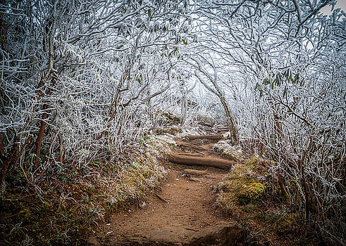 Blue Ridge Parkway NC An Entrance To Winter by Robert Stephens