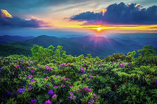 Blue Ridge Parkway NC Flowering Craggy by Robert Stephens