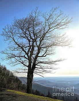 Blue Ridge Parkway - Rocky Knob - Floyd Virginia by Kerri Farley