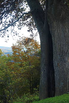 Blue Ridge Parkway Tree by Cathy Lindsey