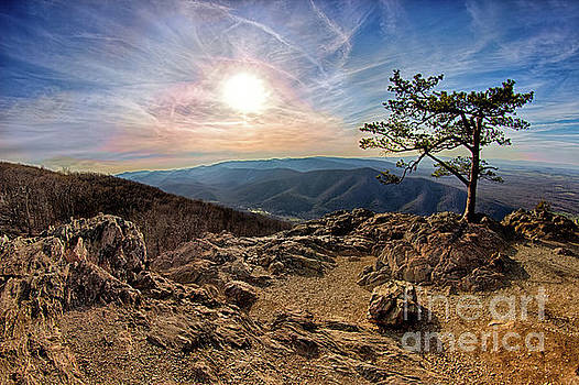 Blue Ridge Rocky Hilltop and Tree at Sunset by Dan Carmichael