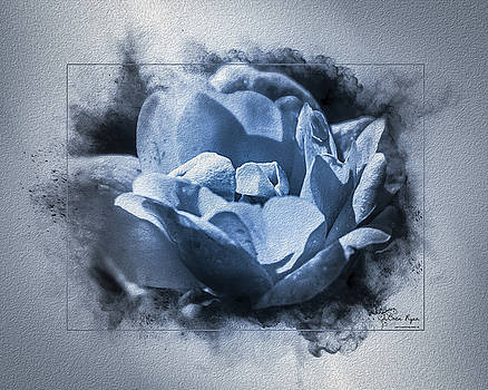 Blue Rose by Bren Ryan