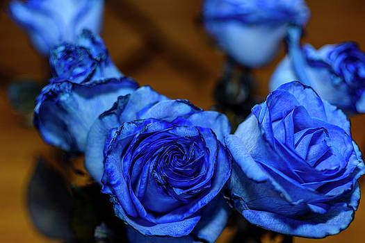 Blue Roses by Tim Buisman
