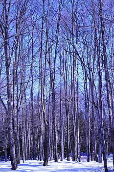 Blue Shadows on Snow by Alan Kurtz