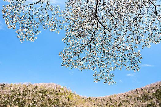 Tamyra Ayles - Blue Skies and Dogwood