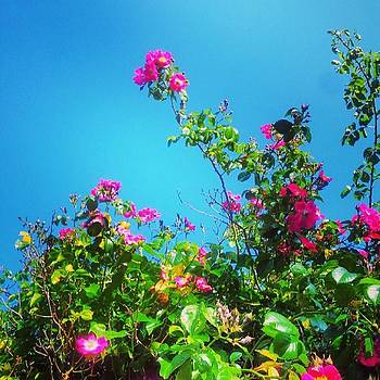 Blue Skies And Shocking Pink Colours by Jennie Davies