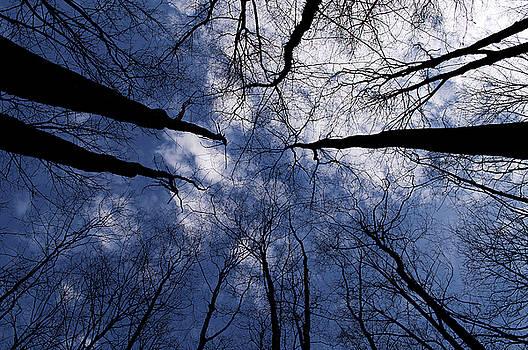 Blue Skies in th Forest by Samantha Boehnke
