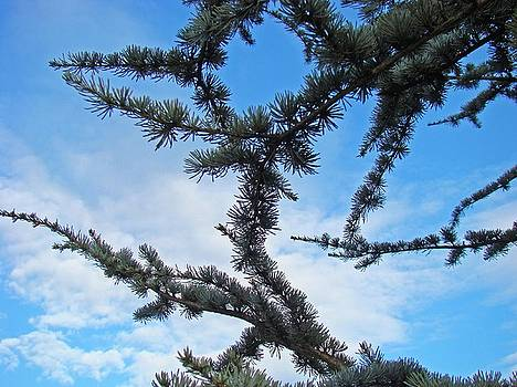 Baslee Troutman - Blue Sky Art Prints White Clouds Conifer Pine Branches Baslee Troutman