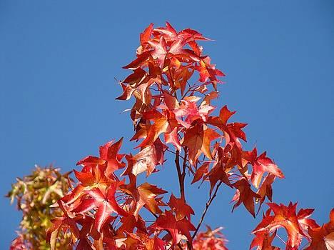 Baslee Troutman - Blue Sky Fall Tree Leaves Landscape art prints Baslee Troutman
