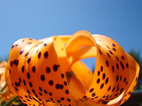 Baslee Troutman - Blue Sky Floral art prints Orange Tiger Lily Baslee Troutman