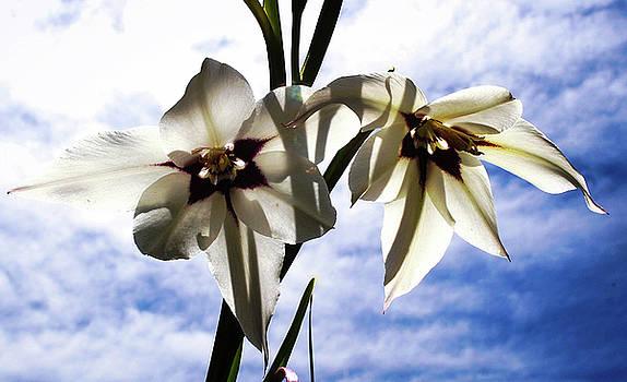 Blue sky flower by Amy Layton