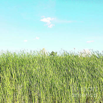 Blue sky over green grass by Cindy Garber Iverson