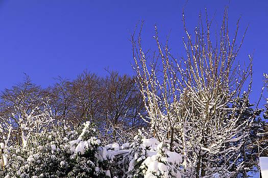 Blue Sky by Tony Murtagh