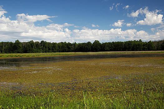 Blue Sky White Clouds and Swamp by Amanda Kiplinger