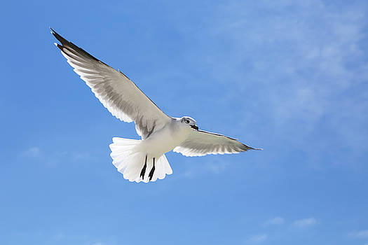 Blue Sky with Seagull by Jim Clark
