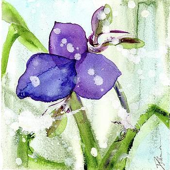 Blue Spiderwort Single by Dawn Derman