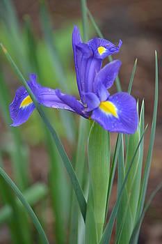 Blue Spring by Joe Bledsoe