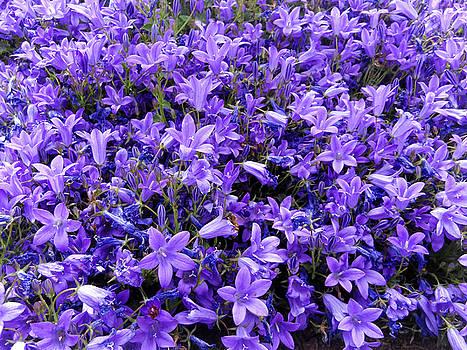 Blue spring by Sergey Nassyrov