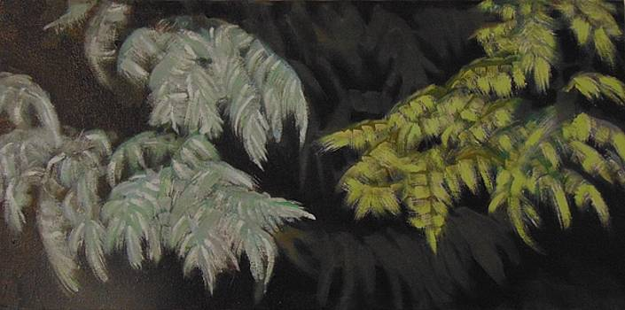 Blue Spruce/ Green Spruce by Kim Webb