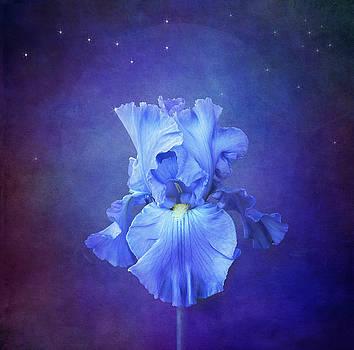 Blue  Symphony by Marina Kojukhova