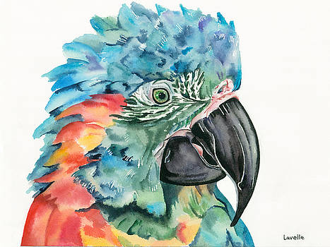 Blue-throated Macaw by Kimberly Lavelle