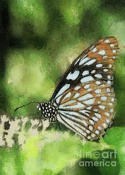 Lois Bryan - Blue Tiger