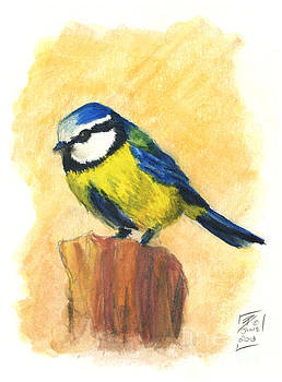 Blue Tit by Brandy Woods