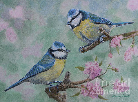 Blue Tits and Cherry Blossom by Elaine Jones