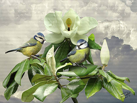 Blue Tits in Magnolia Tree by Matt Schwartz