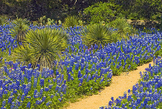 Robert Anschutz - Blue Trail