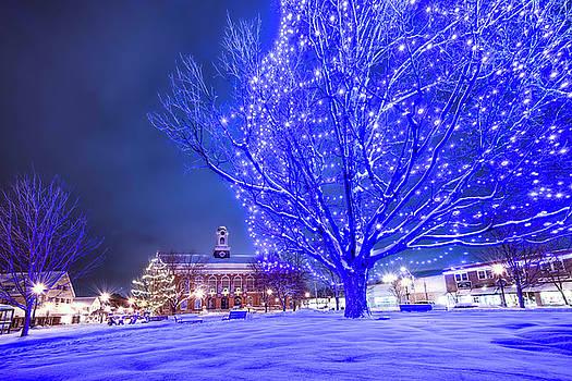 Thomas Gaitley - Blue Tree - The Final Year