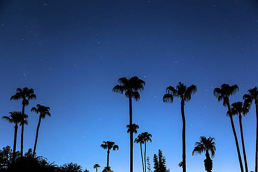 Blue Tropical Night by James BO Insogna