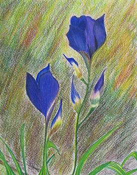 Blue Tulips by Paula Peltier