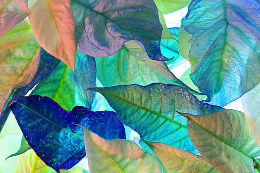 Blue Velvet by Bobby Villapando
