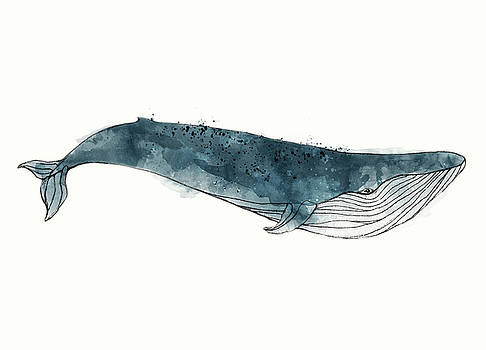Blue Whale from Whales Chart by Amy Hamilton