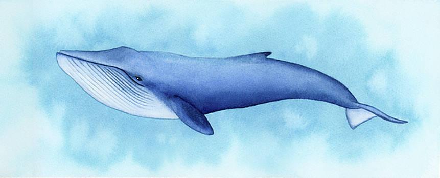 Blue Whale by Zapista