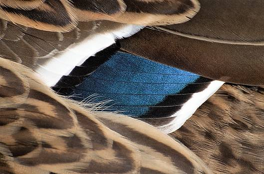 Blue wing by Renee Pettersson