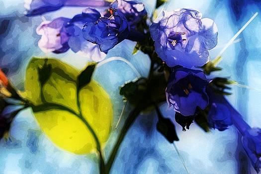 Bluebell 10 by Galen Puronen